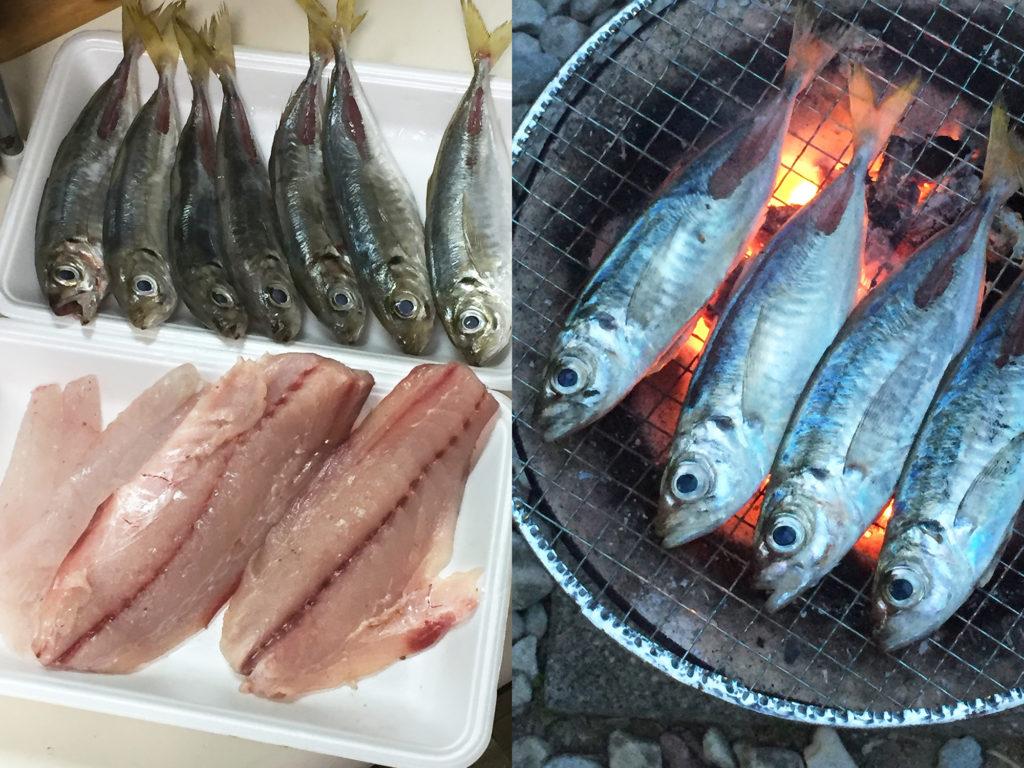 尺アジとアラカブは刺身に。アジゴは七輪で焼き魚。